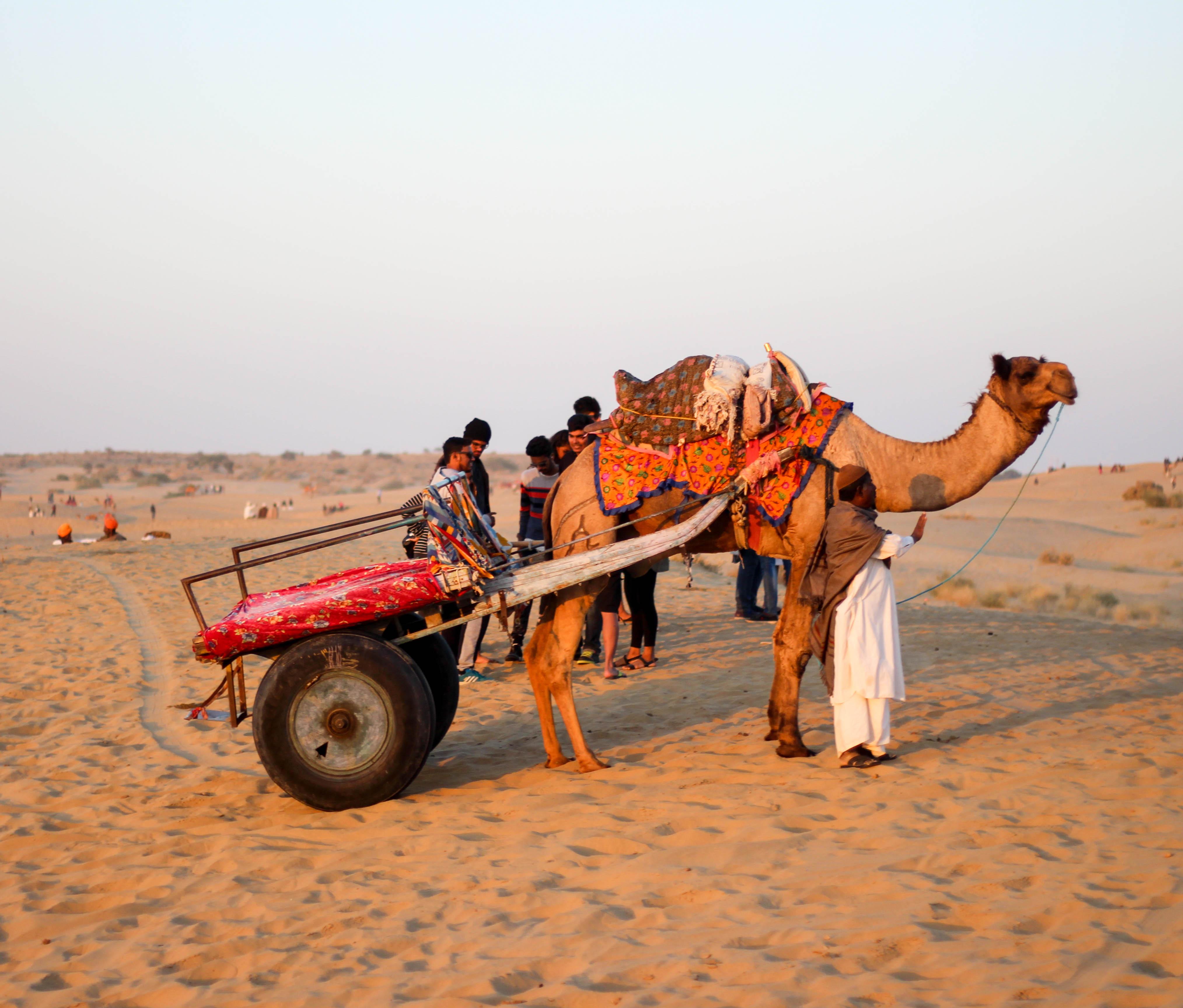 Camel ride at SAM Sand Dunes